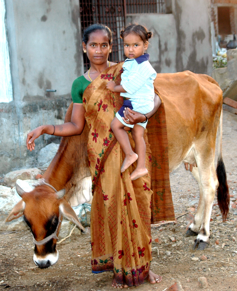 Donate a cow through Compassion to a family in need