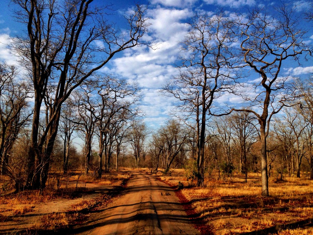 Liwonde National Park is beautiful and home to many wild animals