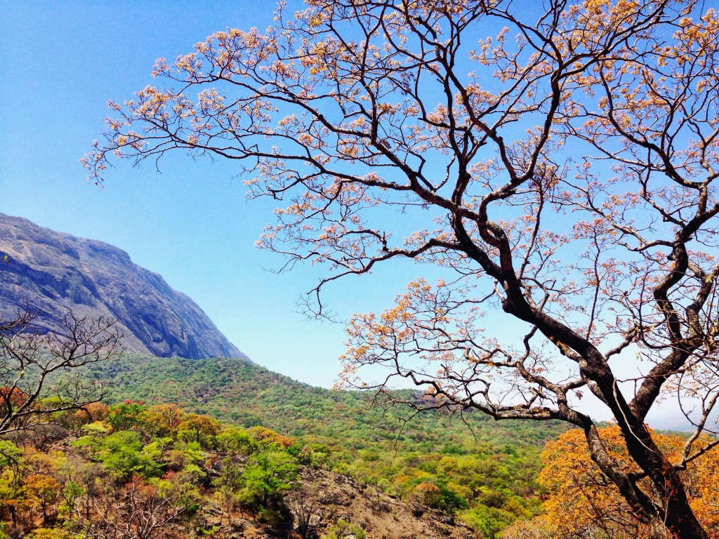 Mt. Mulanje National Park is absolutely stunning.  It is also home to the 2nd tallest peak in all of Africa